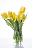 Yellow tulips flowers bouquet in a glass vase. On a white background Stock Images