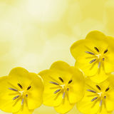 Yellow tulips flowers, floral arrangement,  Royalty Free Stock Image