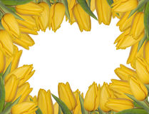 Yellow tulips frame Royalty Free Stock Image
