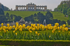 Yellow tulips in front of Gloriette building at the top of Schenbrunn park and palace in Vienna Royalty Free Stock Image