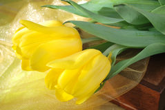 Yellow tulips on a gift Stock Photography