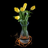 Yellow tulips in a glass vase Stock Photography
