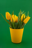 Yellow tulips on green Royalty Free Stock Images