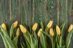 Yellow tulips on green wooden background, happy easter time Stock Image
