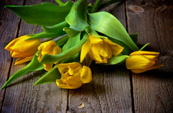 Yellow Tulips Stock Photography