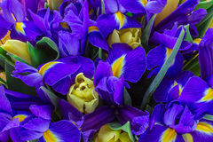 Yellow tulips with the irises. top view Royalty Free Stock Images