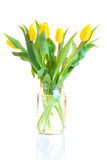 Yellow tulips. In the jar  on white background Royalty Free Stock Images