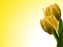 Yellow tulips landscape background Stock Images