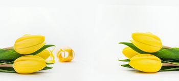 Yellow tulips on a light background, banner Royalty Free Stock Images
