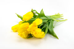 Yellow tulips on a light background royalty free stock image