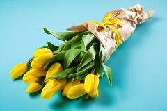 Yellow tulips on blue background Stock Images
