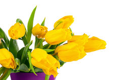 Yellow tulips in lilac vase isolated on white background. Royalty Free Stock Images