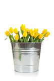 Yellow tulips in a metal pail on white Stock Image
