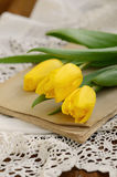 Yellow tulips upon old book Royalty Free Stock Photo