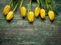 Yellow  tulips over shabby green wooden table Royalty Free Stock Photography