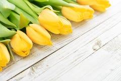 Yellow tulips over white Stock Photo