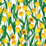Yellow tulips pattern Stock Photography