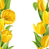 Yellow tulips realistic background Royalty Free Stock Image