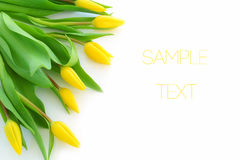 Yellow tulips with room for text Stock Photography