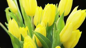 Yellow Tulips Rotating on Black Background stock video footage