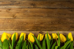 Yellow  tulips row on wooden background, copy space Stock Images
