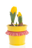 Yellow tulips in spring Royalty Free Stock Photos