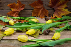 Yellow tulips with strobile Royalty Free Stock Photo