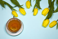 Yellow tulips with a tea on a blue background Stock Photos