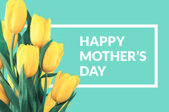 Yellow tulips on turquoise background with greeting message. Mot Royalty Free Stock Photo