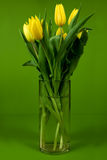 Yellow tulips in vase Royalty Free Stock Images