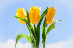 Yellow tulips in vase on window sill Royalty Free Stock Photo