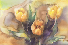 Yellow tulips watercolor. Yellow tulips bouquet on yellow background hand made watercolor Royalty Free Stock Images