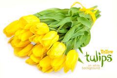Yellow tulips on white background Royalty Free Stock Image