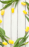 Yellow tulips on white planked wood background from above Stock Images