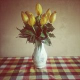 Yellow tulips in a white vase on a checkered table Stock Photos