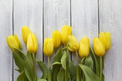 Yellow Tulips on White Wood Royalty Free Stock Photo