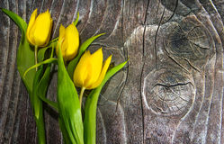 Yellow tulips on wood. Three yellow tulips on wood background royalty free stock photo