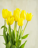 Yellow tulips on wooden background Royalty Free Stock Photography