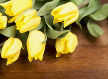 Yellow tulips Royalty Free Stock Images