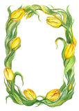 Yellow tulips, wreath. Stock Images