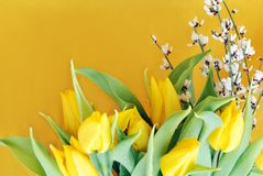 Yellow tulips on yellow Royalty Free Stock Image