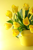 Yellow tulips on a yellow background Royalty Free Stock Images