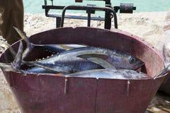 Yellow tuna fish Royalty Free Stock Images