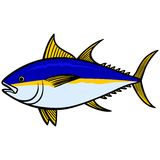 Yellow Tuna Royalty Free Stock Photo
