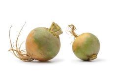 Yellow turnips Royalty Free Stock Photography
