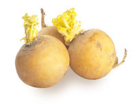 Yellow turnips Stock Images