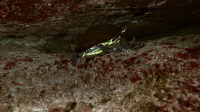 Yellow turtle in cave lake Yucatan Mexican cenote stock video footage