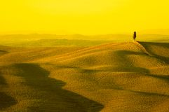 Yellow tuscany Stock Images