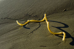 Yellow Twist Washed Ashore Stock Photo