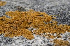Yellow Type Mildew Texture On Pavement Royalty Free Stock Photos